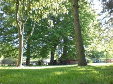 Bilder vom Buchenhof_13