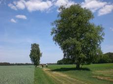 Das Ausreitgelände rund um den Buchenhof _3